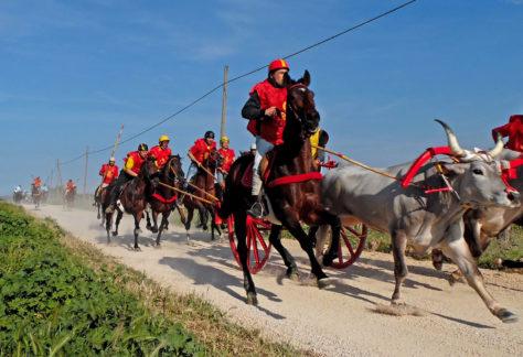 Carrese: tradizionale corsa dei buoi basso-molisana